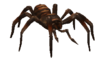 Babyspinne.png