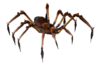 Giftspinne.png